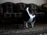 2. Ходячий шар - Лошадка